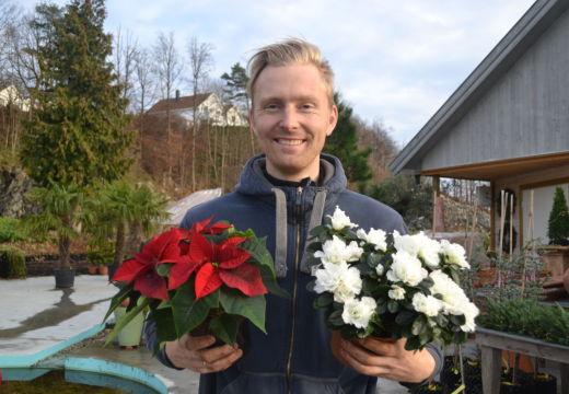 Julestjernen taper terreng på Sørlandet